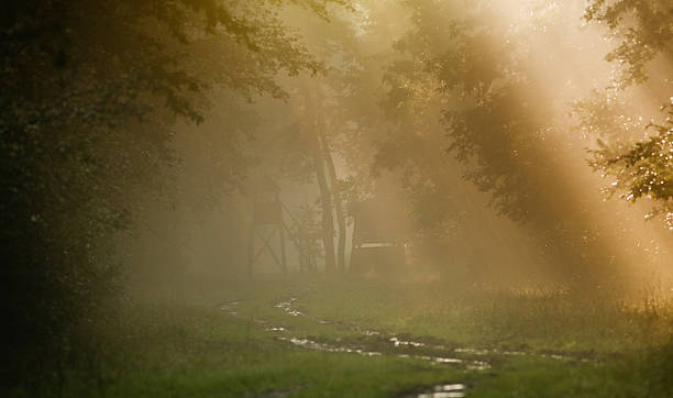 Foggy forest Forest landscape on foggy morning with sun rays and watch tower in background hunting blind stock pictures, royalty-free photos & images