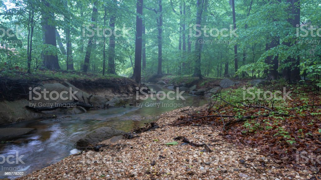 Foggy Forest - Royalty-free Achtergrond - Thema Stockfoto