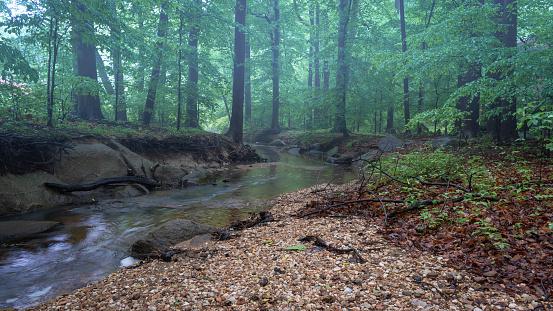 Foggy Forest Stockfoto en meer beelden van Achtergrond - Thema
