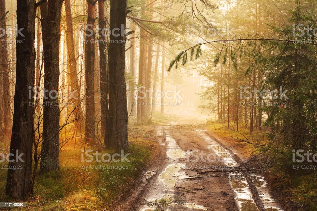 Foggy Forest Road after the Rain royalty-free stock photo