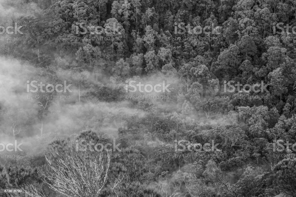 Foggy forest valley stock photo