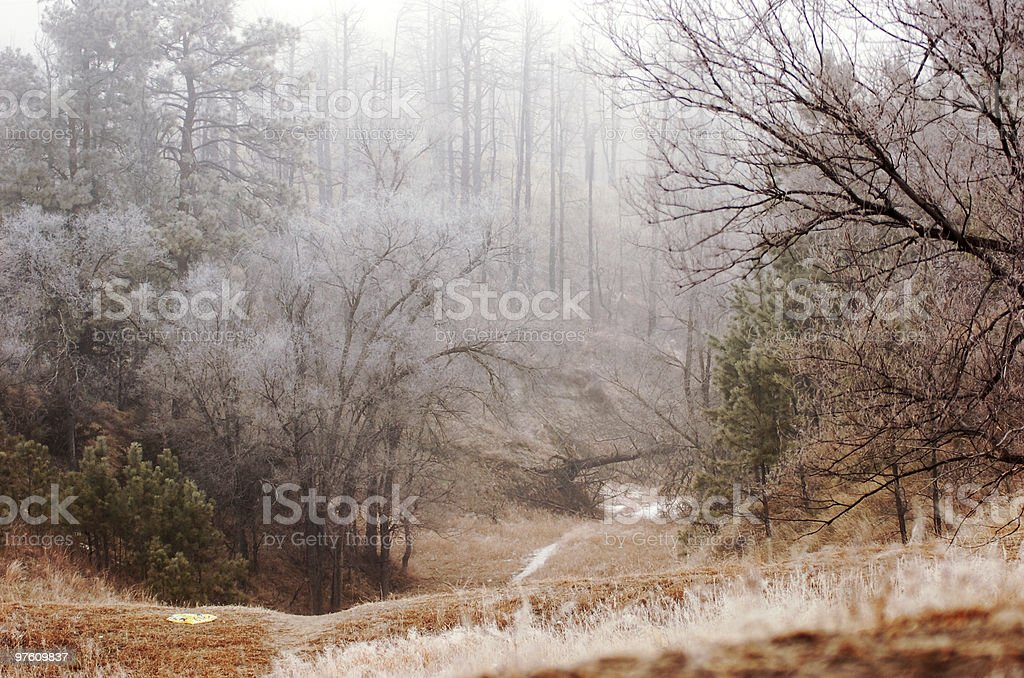 Foggy, frosty, trail royalty-free stock photo