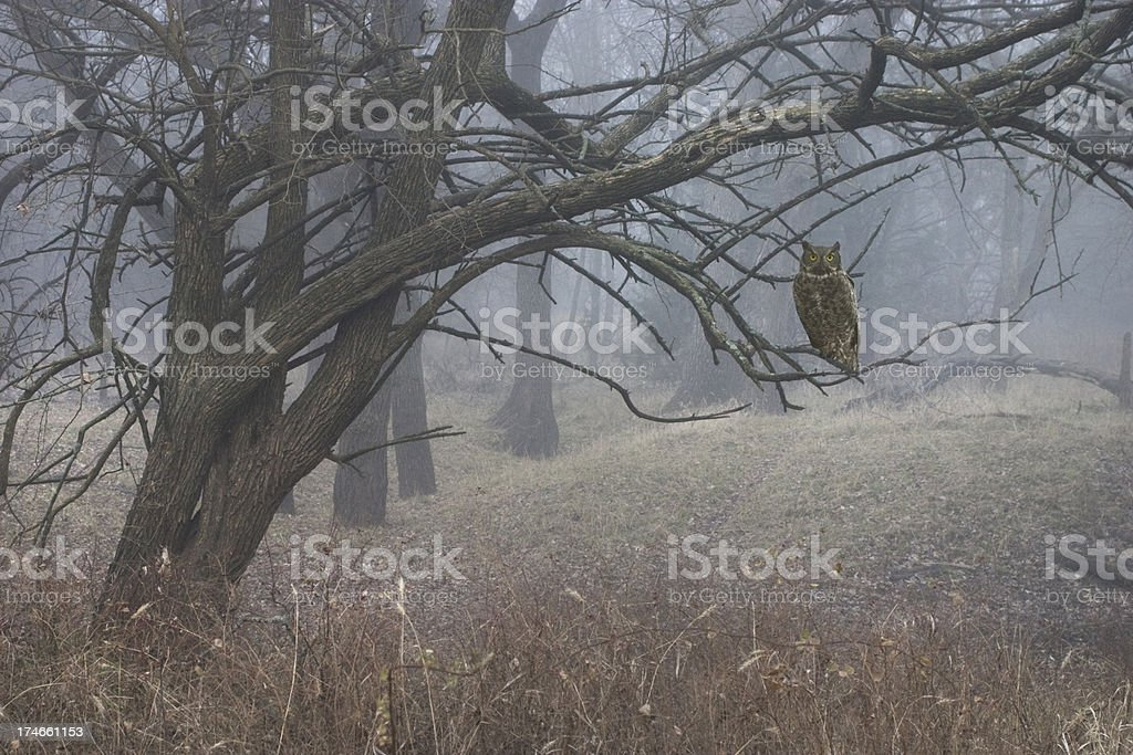 Foggy Haunted Forest with Mysterious Owl royalty-free stock photo