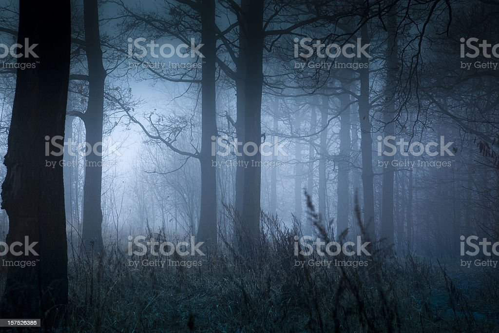 Foggy landscape in autumn stock photo