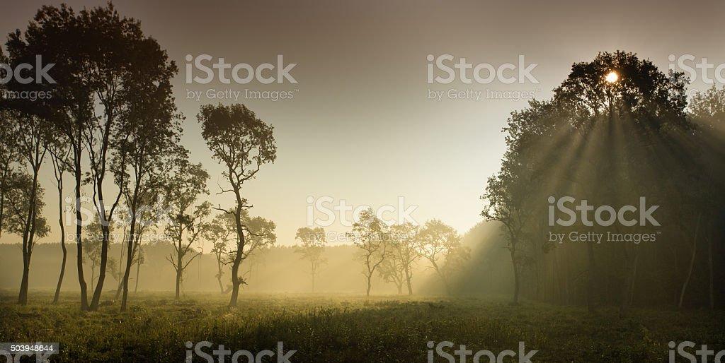 Foggy landscape in plains stock photo