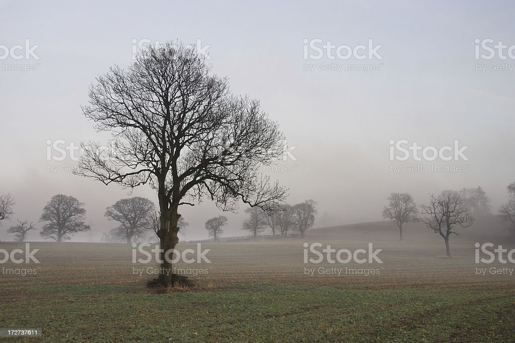 Foggy landscape of bare trees stock photo