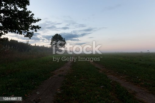summer landscape during the twilight, completely covered by a mist haze field, a summer landscape, in the distance grows a tree to which the road leads with two ruts