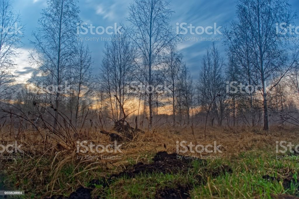 Foggy Landscape With Creepy Forest And Swamp Stock Photo