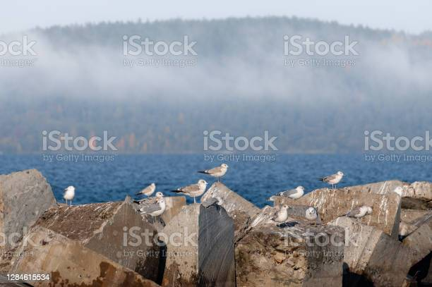 Photo of foggy landscape with seagulls sitting on stones