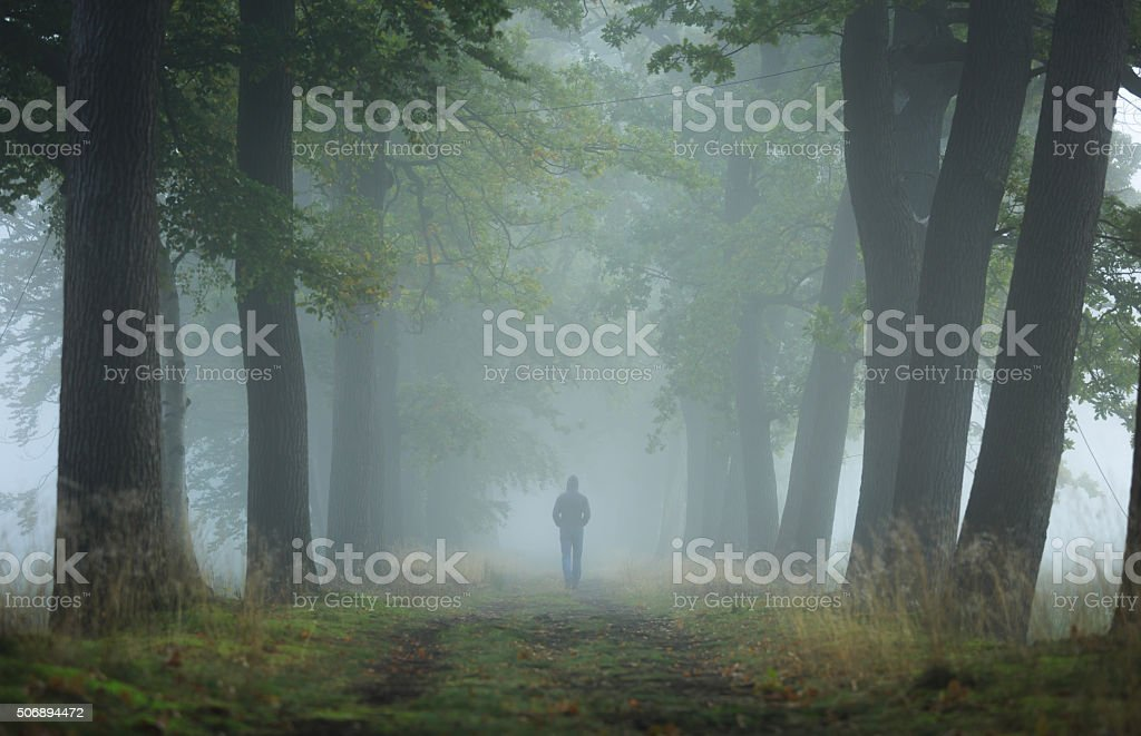 Foggy lane stock photo