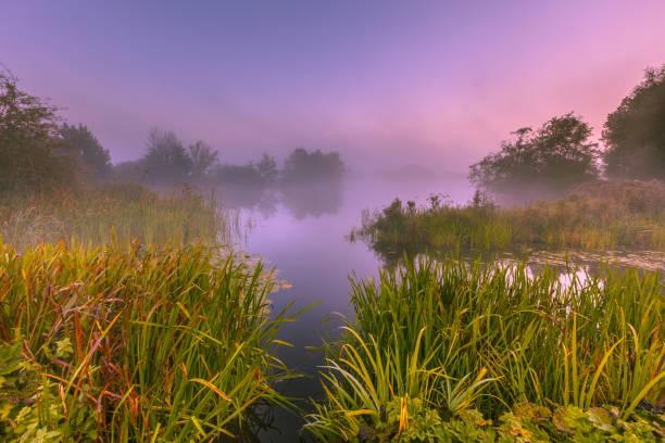 Foggy Marshland stock photo