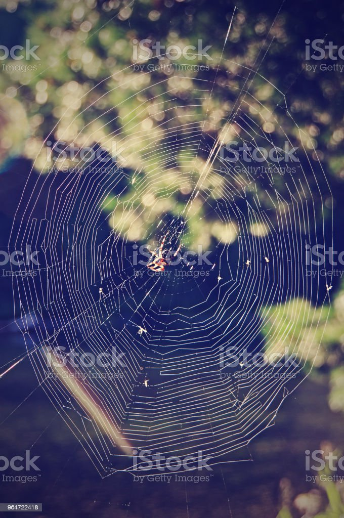foggy morning and spider web royalty-free stock photo