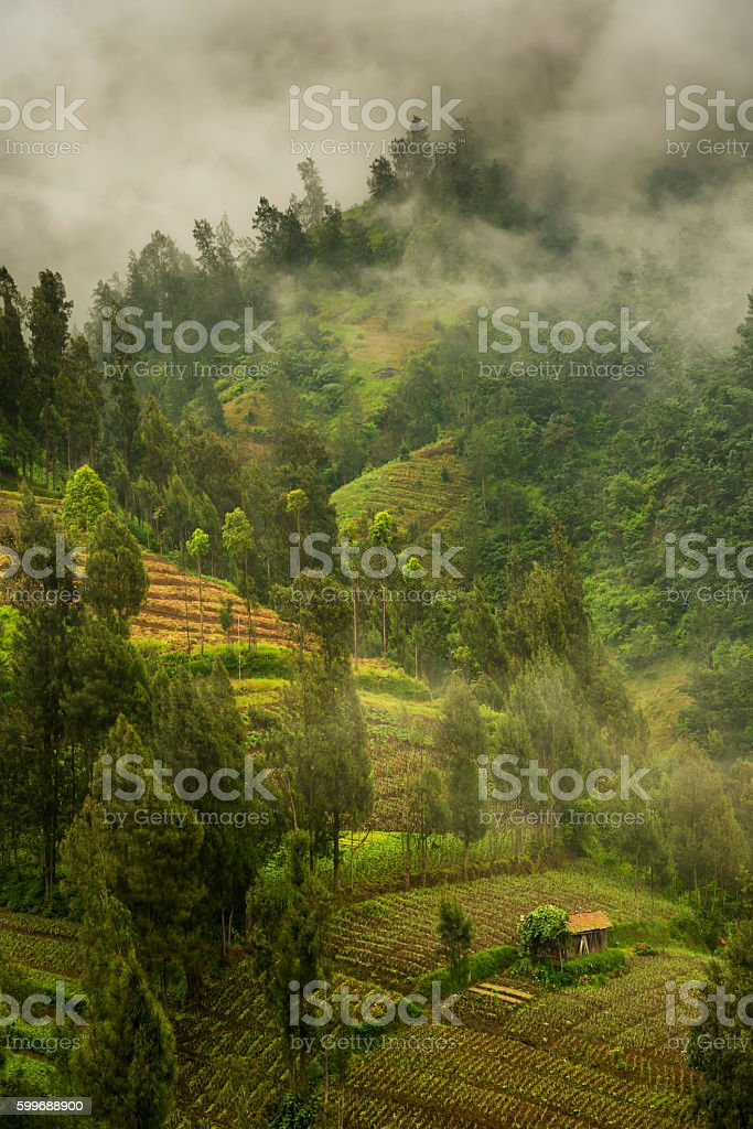Foggy morning at the slopes of Bromo volcano, Java, Indonesia stock photo