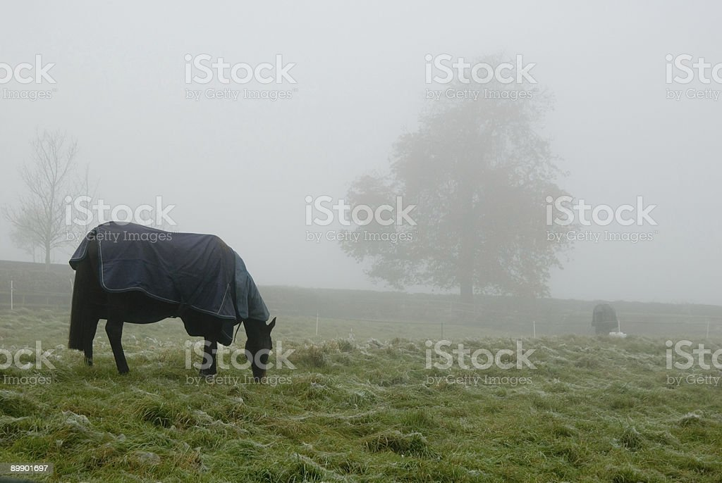Foggy Morning for these Horses royalty-free stock photo
