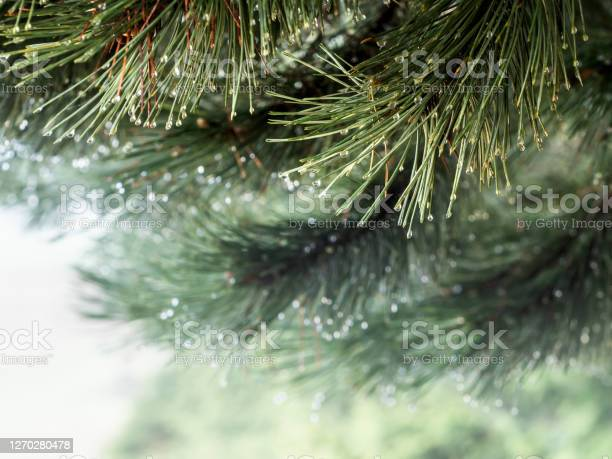 Photo of Foggy morning forest banner with space for text.