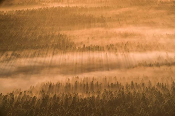 Matin brumeux, forêt Glasshouse Mountains - Photo