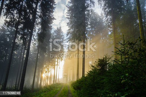 Foggy morning in a spruce forest with strong sunbeams in autumn. A forest track leads to the background. Image taken near the town of Bad Berleburg, Germany.