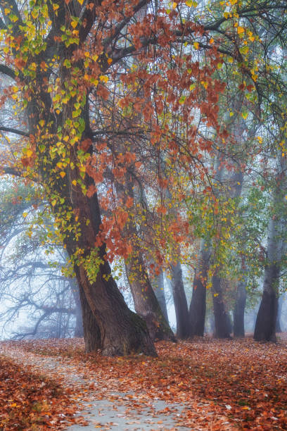 Foggy morning in the beautiful park with autmn colored trees stock photo