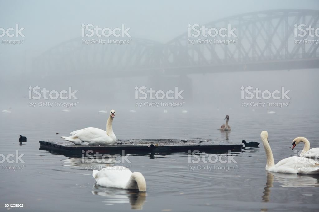 Foggy morning in the city royalty-free stock photo