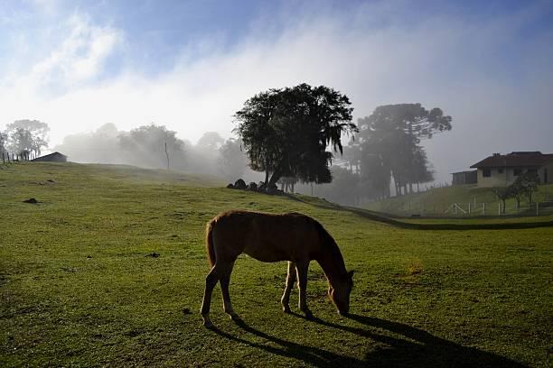 Manhã de neblina no campo - foto de acervo