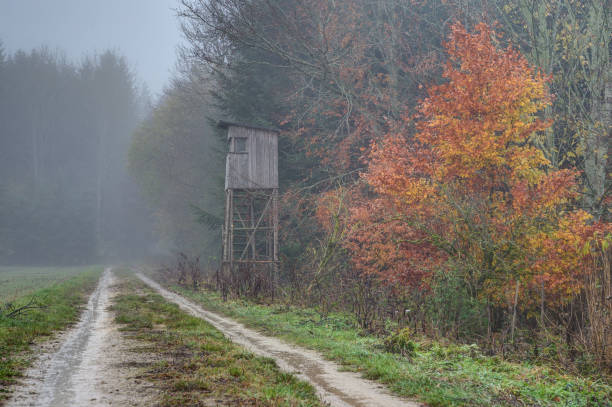 A foggy morning in the hunting area stock photo