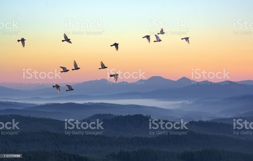 Foggy morning in the mountains with flying birds over silhouettes of hills. Serenity sunrise with soft sunlight and layers of haze. Mountain landscape with mist in woodland in pastel colors - Royalty-free Amanhecer Foto de stock