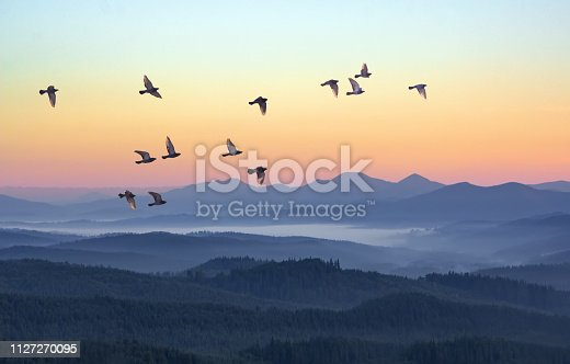 Foggy morning in the mountains with flying birds over silhouettes of hills. Serenity sunrise with soft sunlight and layers of haze. Mountain landscape with mist in woodland in pastel colors