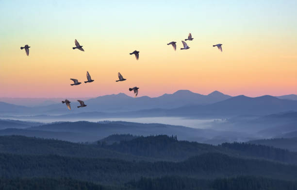 Foggy morning in the mountains with flying birds over silhouettes of hills. Serenity sunrise with soft sunlight and layers of haze. Mountain landscape with mist in woodland in pastel colors Foggy morning in the mountains with flying birds over silhouettes of hills. Serenity sunrise with soft sunlight and layers of haze. Mountain landscape with mist in woodland in pastel colors bird stock pictures, royalty-free photos & images