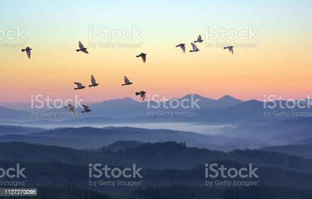 Foggy Morning In The Mountains With Flying Birds Over Silhouettes Of Hills Serenity Sunrise With Soft Sunlight And Layers Of Haze Mountain Landscape With Mist In Woodland In Pastel Colors - Fotografias de stock e mais imagens de Amanhecer