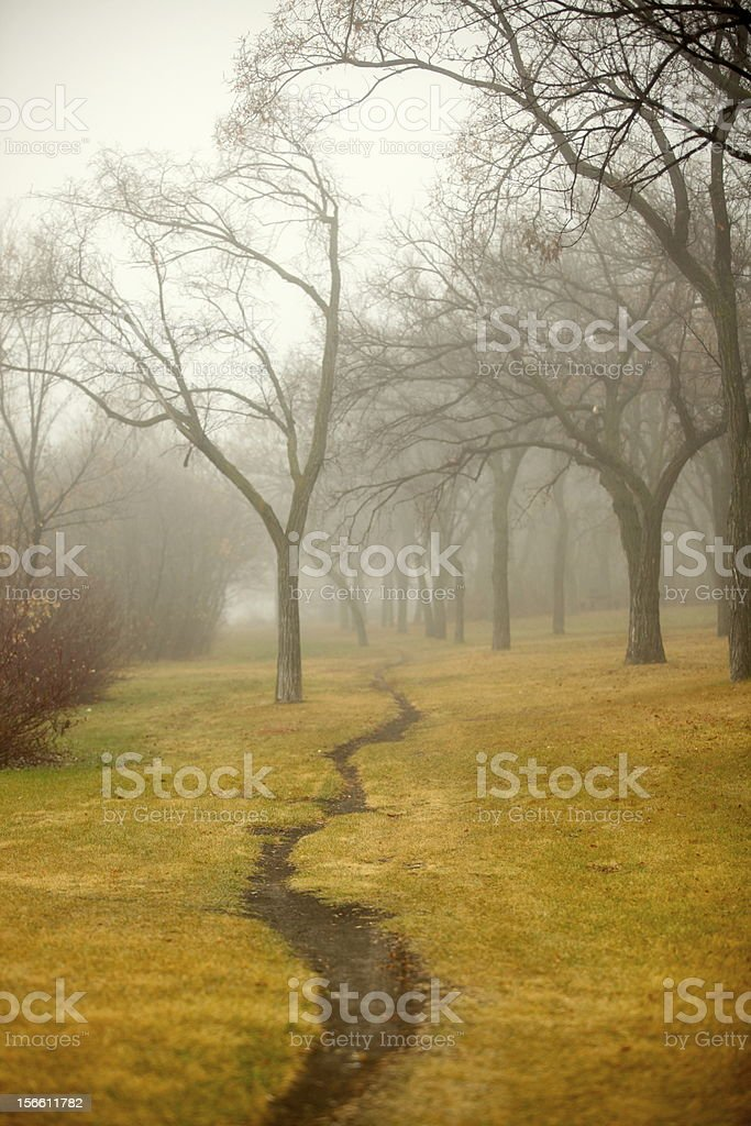 Foggy Morning in the Park royalty-free stock photo