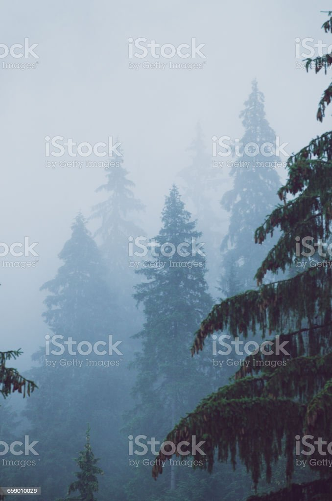 Foggy morning landscape royalty-free stock photo