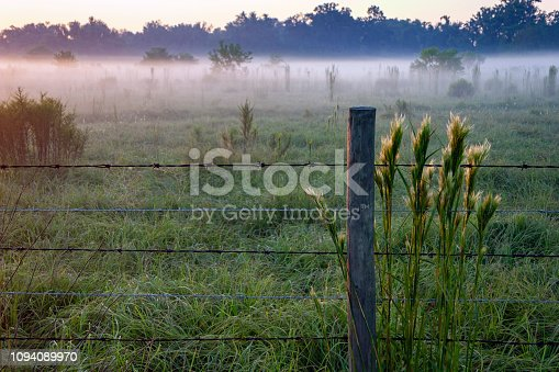 Foggy Morning by a Fence on a Farm in Kissimmee, Florida