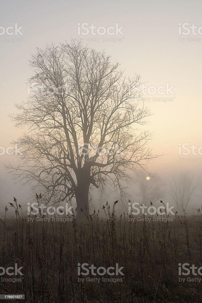 Foggy Morning royalty-free stock photo