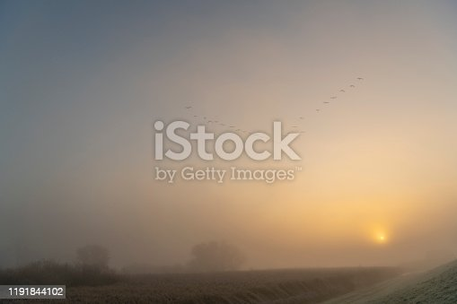 Foggy morning sunrise over the IJsseldelta river landscape at the start of a misty fall day in Overijssel, The Netherlands