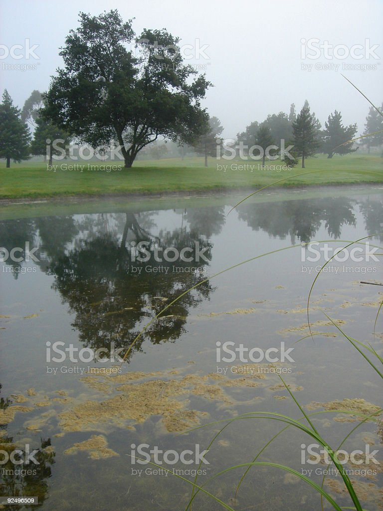 Foggy Morning with Dirty Pond and Old Trees royalty-free stock photo