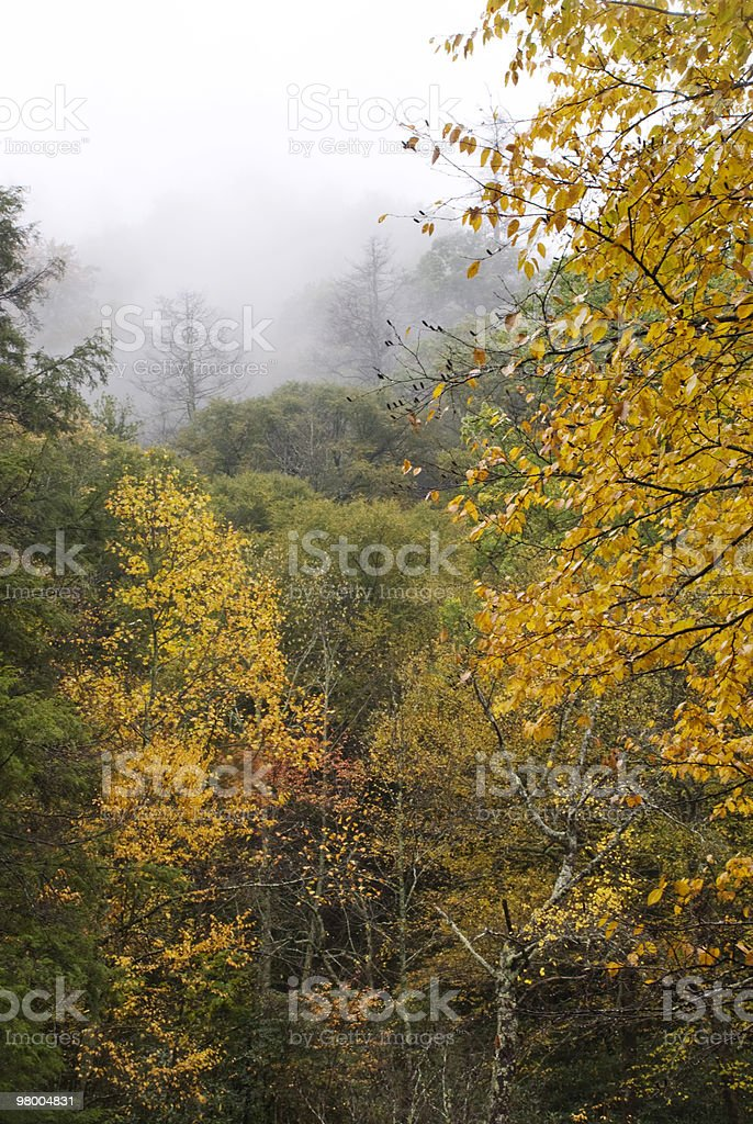 Foggy Mountain Morning in Autumn royalty-free stock photo
