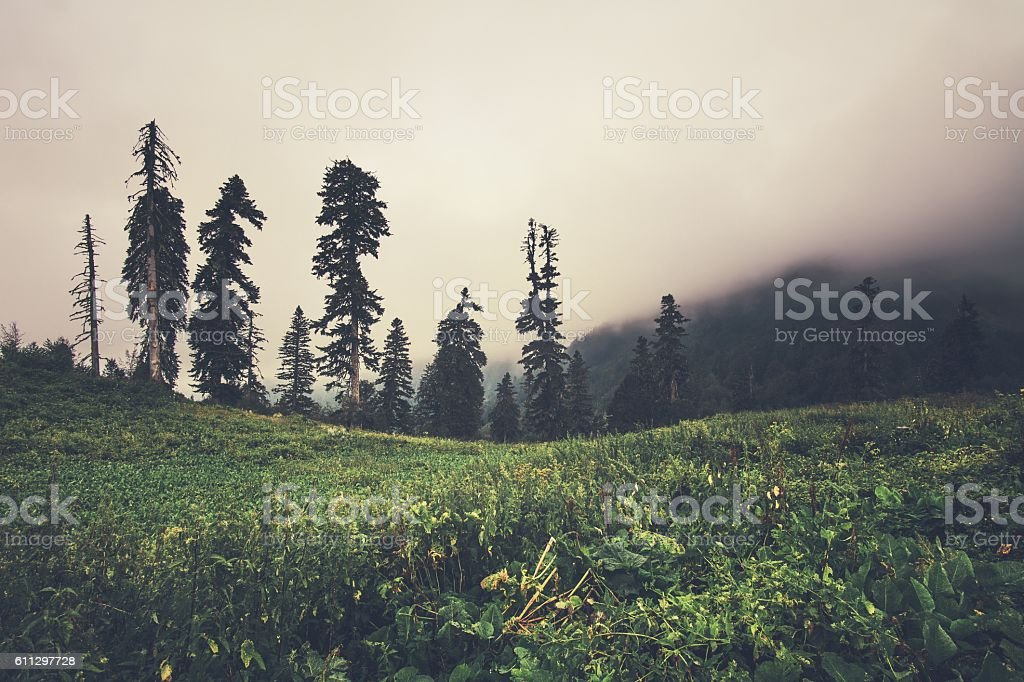 Foggy Mountains forest beautiful landscape rainy clouds moody weather...