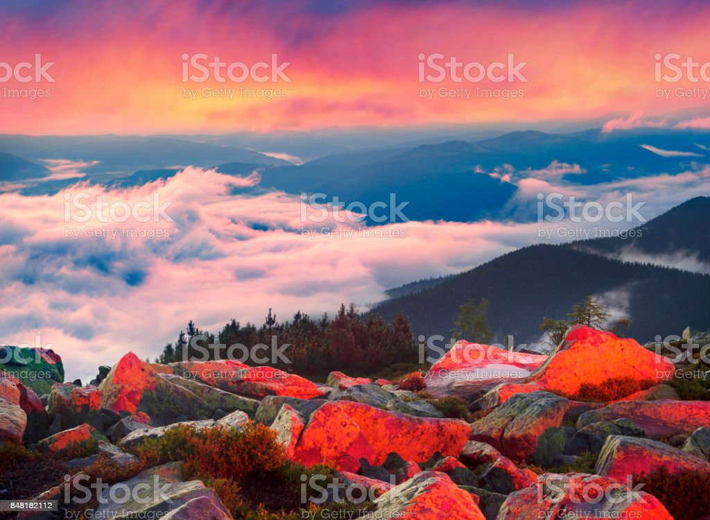 Foggy night on the mountain Hamster stock photo