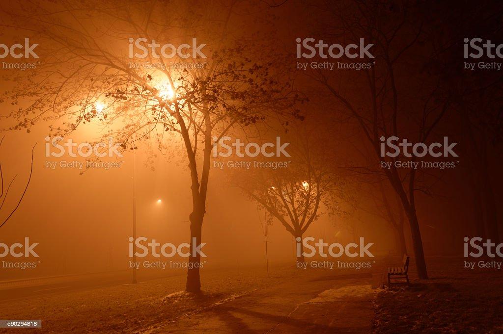 Foggy night royaltyfri bildbanksbilder