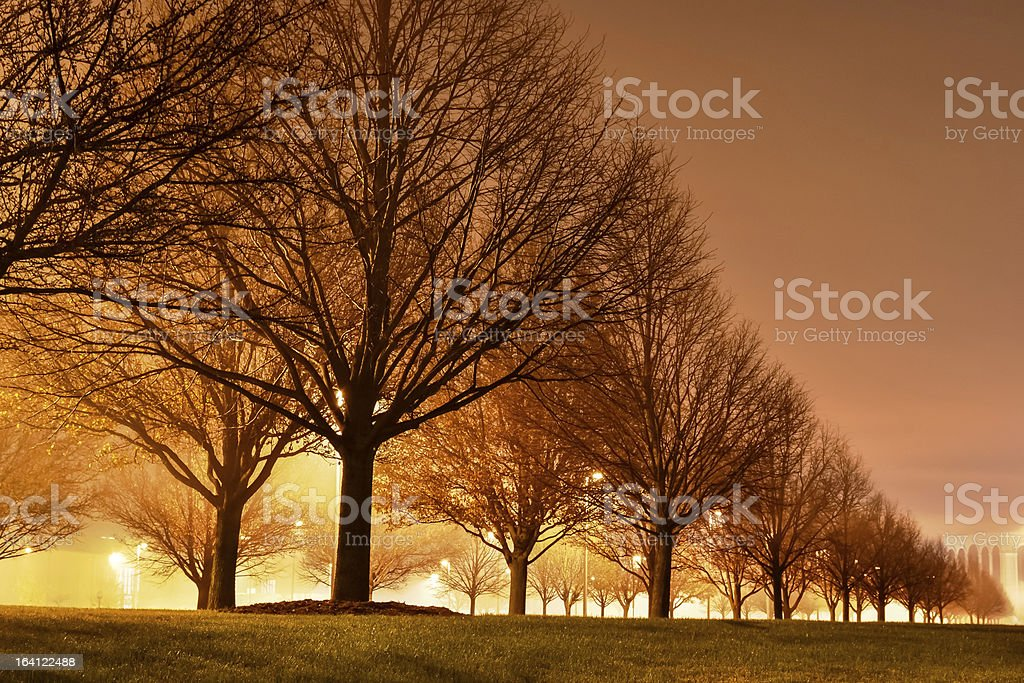 Foggy Night with Trees all a glow royalty-free stock photo