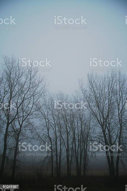 Foggy November Day