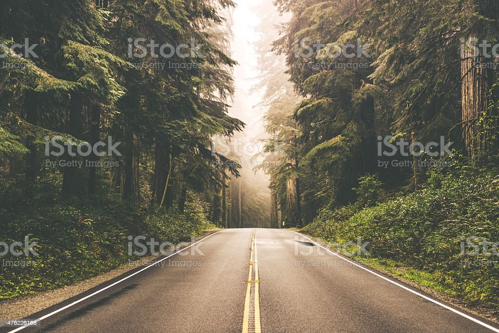 Niebla Redwood Highway - foto de stock