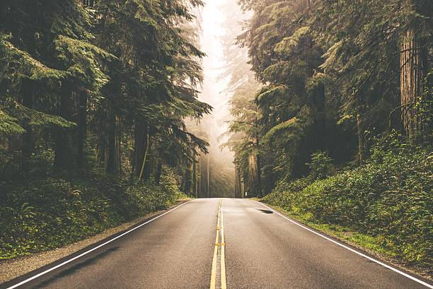 Foggy Redwood Highway Foggy Straight Redwood Highway in Northern California, United States redwood tree stock pictures, royalty-free photos & images