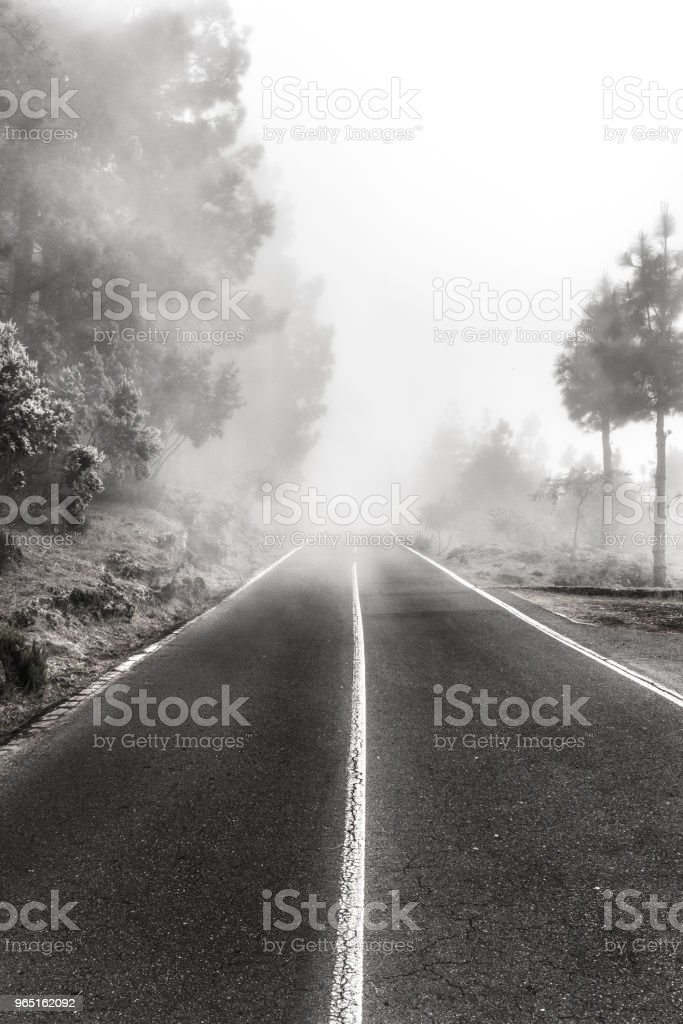 foggy road in forest , trees and highway in fog royalty-free stock photo