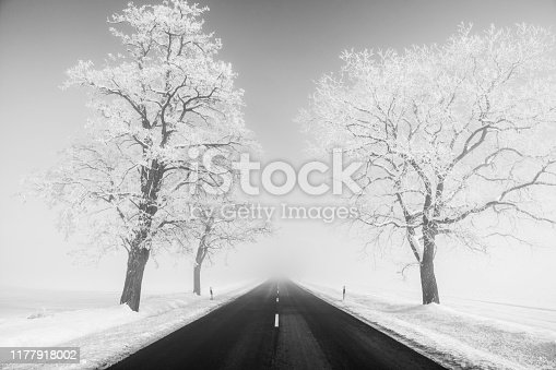 657042754 istock photo foggy snowy road and tree black and white at winter 1177918002