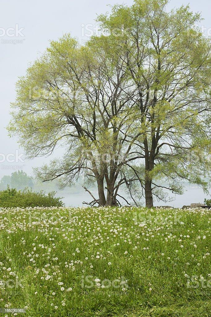 Foggy Spring Morning royalty-free stock photo