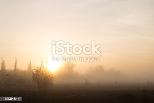 surice at foggy november morning in vegetable garden with trees on background
