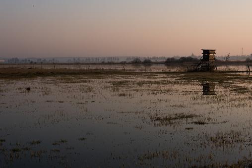 늪 위에 습지에 안개 일출 0명에 대한 스톡 사진 및 기타 이미지