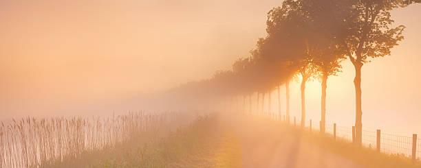 foggy sunrise in typical polder landscape in the netherlands - beemster stockfoto's en -beelden