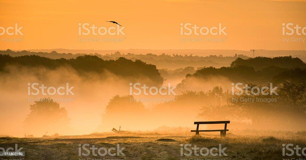 Foggy sunrise over Richmond park stock photo